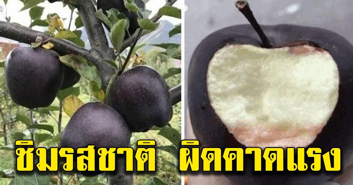 แอปเปิ้ลดำ สายพันธุ์ Black Diamond