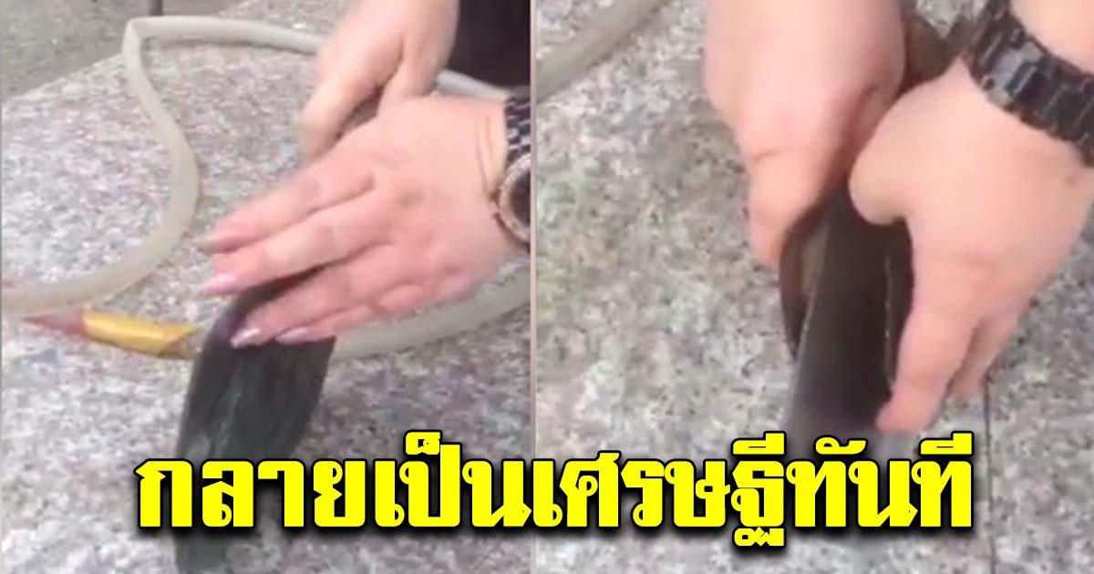 สาวสุดเฮง ใช้มีดแกะ หอยยักษ์ เปิดออกมาถึงกับมือสั่น กลายเป็นเศรษฐีทันที