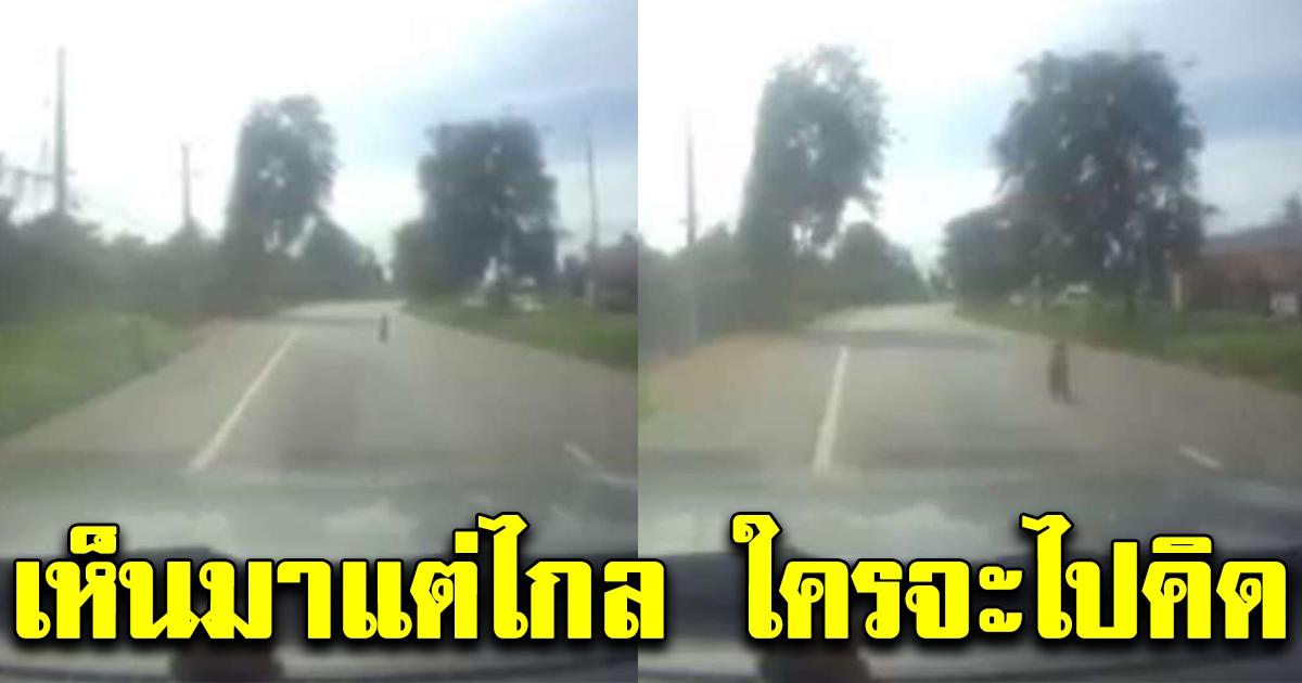หนุ่มใหญ่ตะโกนลั่นรถ รีบจอดกลางถนน อุ้มไปหลบไว้ข้างทาง