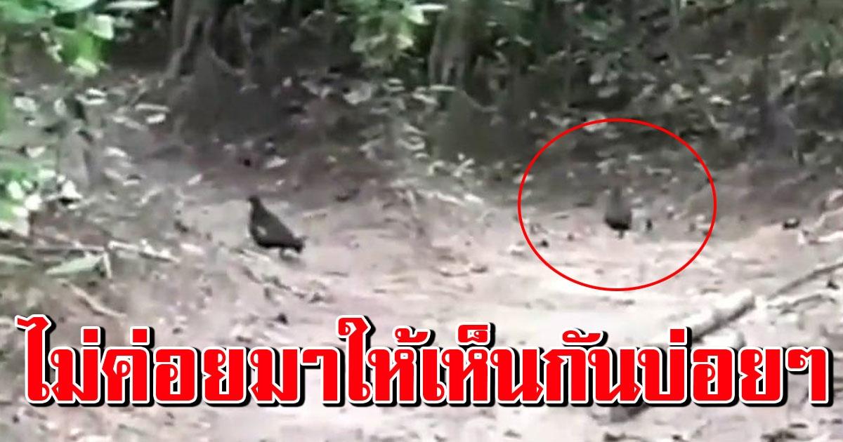 ฮือฮา พบสัตว์ป่าหายากคืนถิ่น เกาะห้อง หลังปิดนานกว่า 3 เดือน