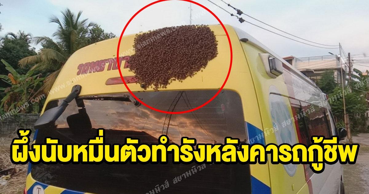 ผึ้งนับหมื่นตัวทำรังหลังคารถ
